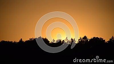 Zonsondergang met bomen stock video
