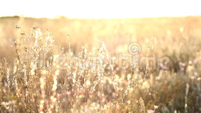 Zonsopgang in de Steppe stock footage
