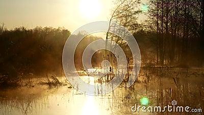 Zonsopgang over het meer in de Oekraïne Mist over het fabelachtig mooie water, stock videobeelden