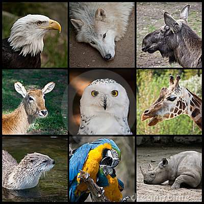 Free Zoo Animals Stock Image - 21990181
