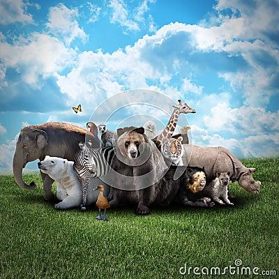Free Zoo Animals On Nature Background Stock Photos - 31663413