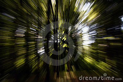 zoom effect dream forest