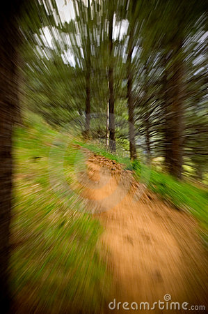 Zoom into forest