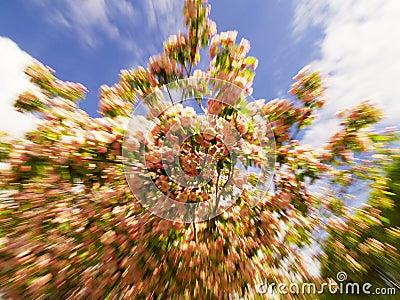 Zumbido/movimento disparado das flores do pêssego