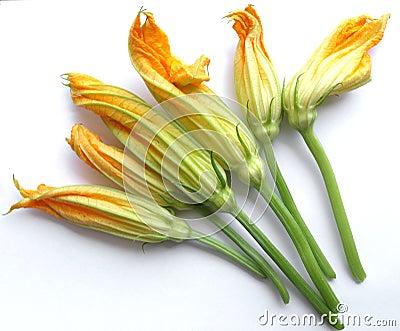 Zucchini Courgette flower
