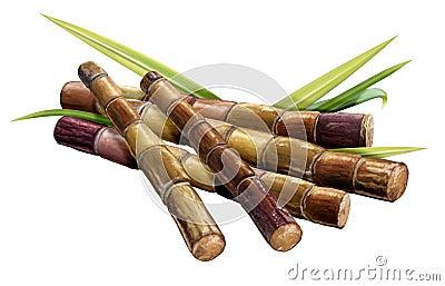 Zuckerrohr und Stock