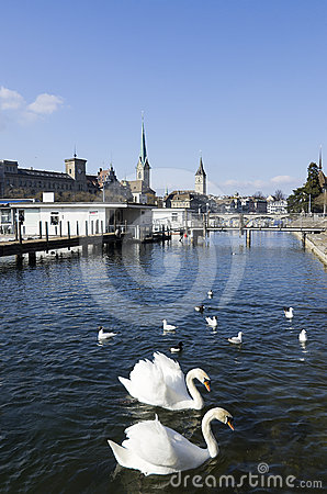 Zurich downtown and Limmat river with swans