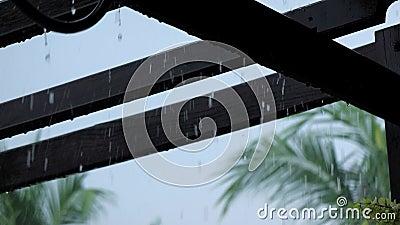 Zware regen op houten pergola in de achtertuin stock video