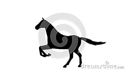 Zwart silhouet van geanimeerd galopperend paard Alpha Channel Alpha- steen 4K stock video