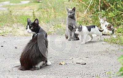 Zwart-witte kat en katjes