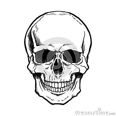 Zwart-witte menselijke schedel met kaak