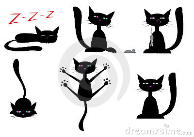 Zwarte katten