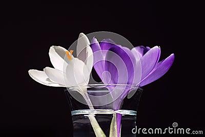 Zwei Blumen