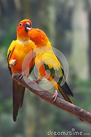 Zwei gelbe Papageien