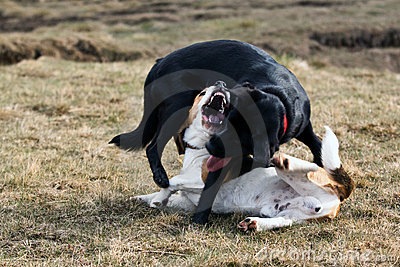 Zwei Hundespielen.