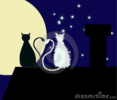 Zwei Katzen auf dem Dach