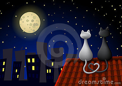 Zwei Katzen auf einem Dach