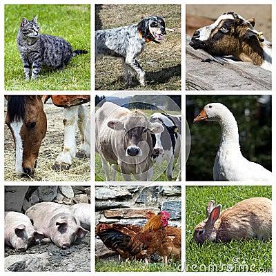 Zwierząt kolażu gospodarstwo rolne