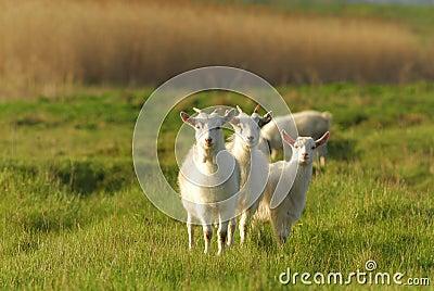 Zwierzęta łąkowi
