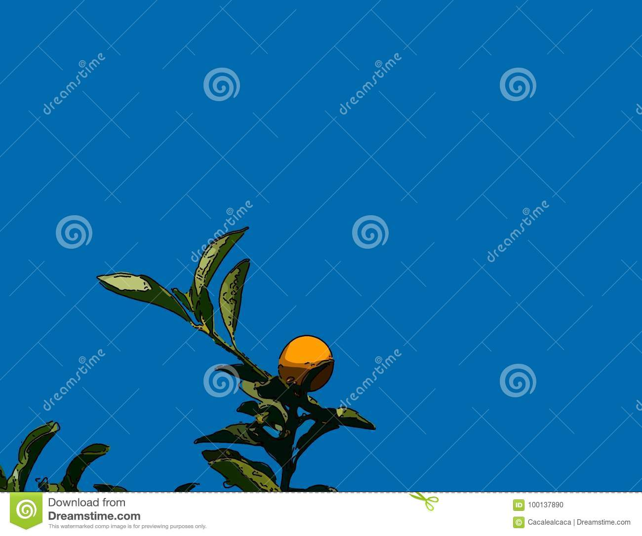 kumquat tree with fruit and leaves line drawn stock illustration