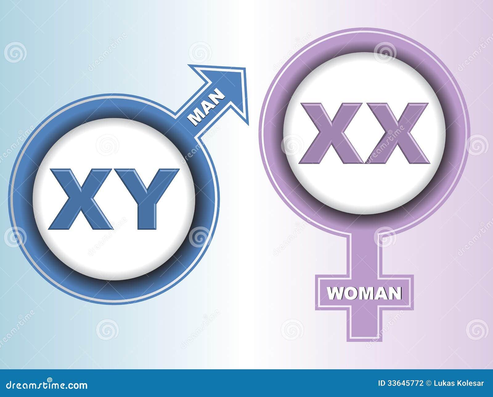 Хромосома Половая фото