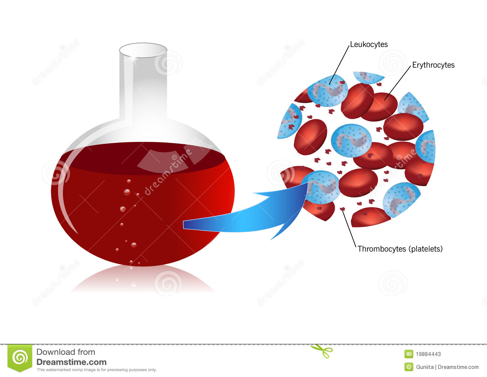 Клетка Крови фото