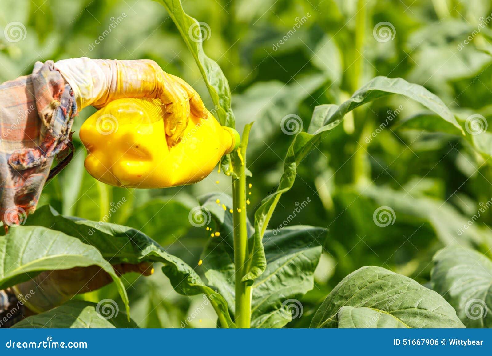 Инсектицид фото