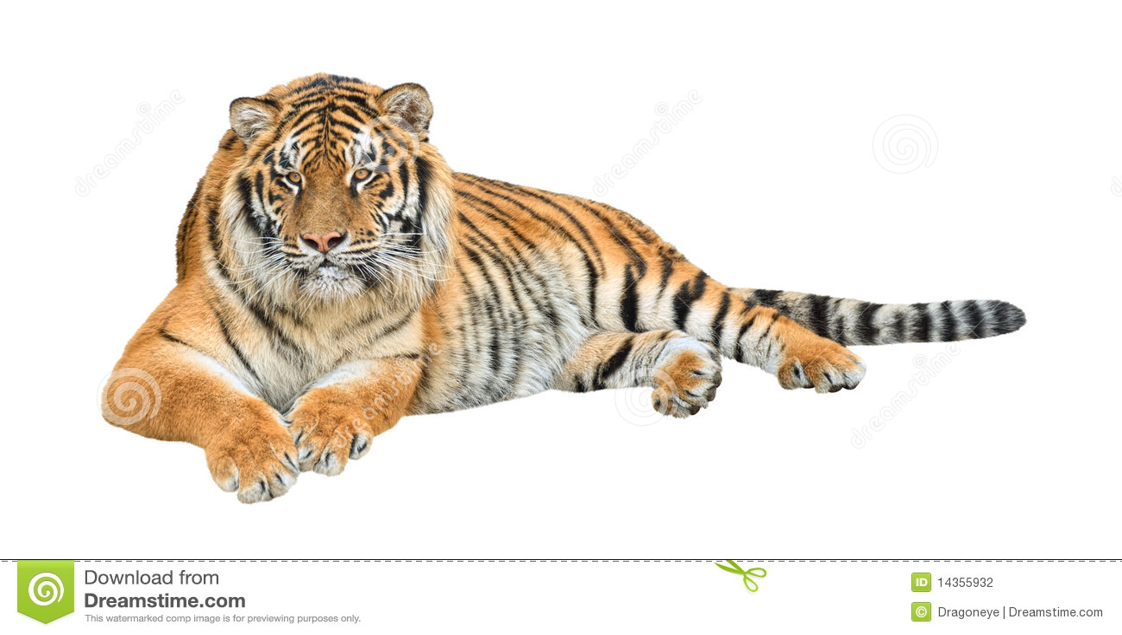 虎 老虎 桌面