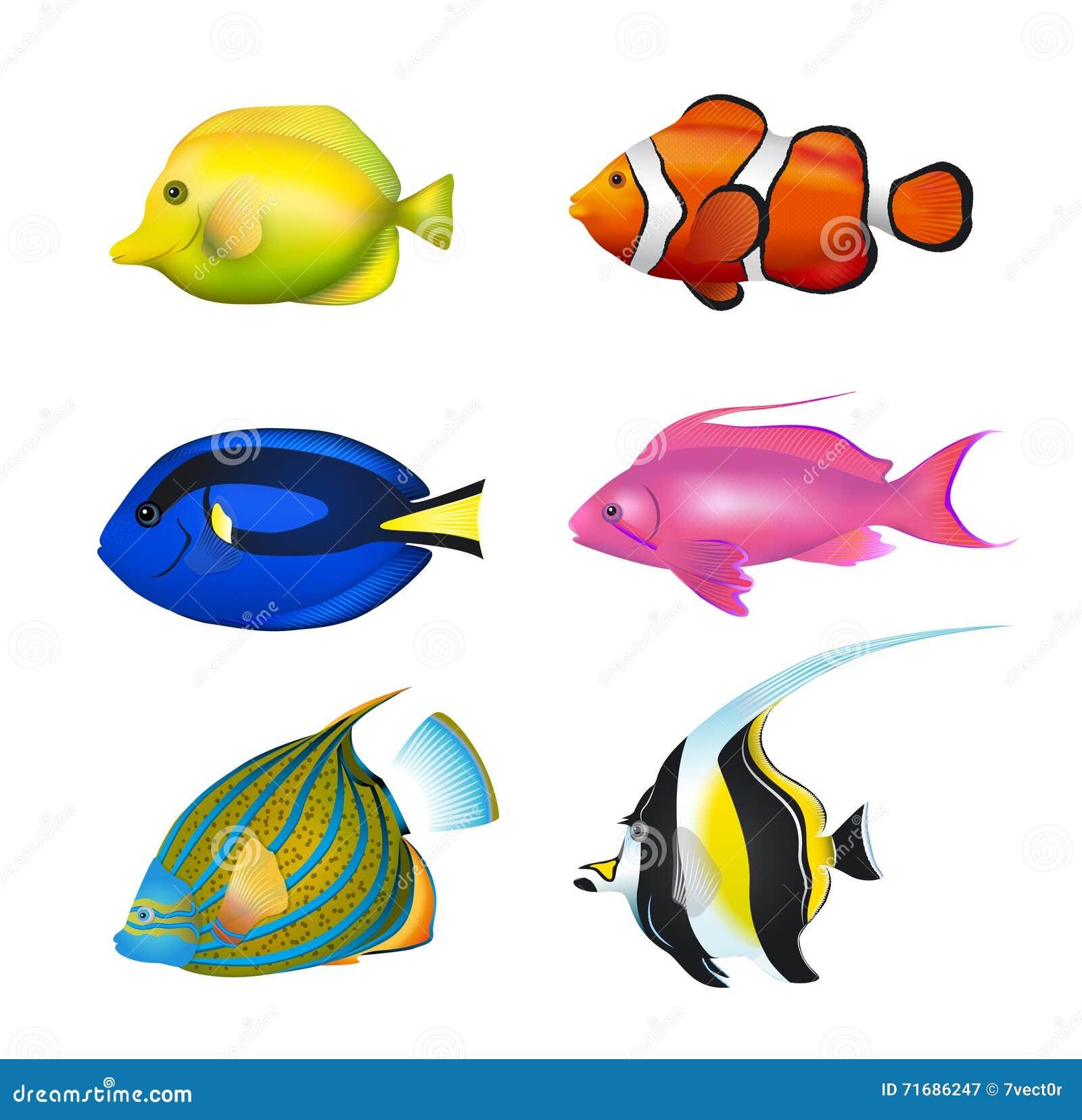 被设置的热带鱼 向量例证图片