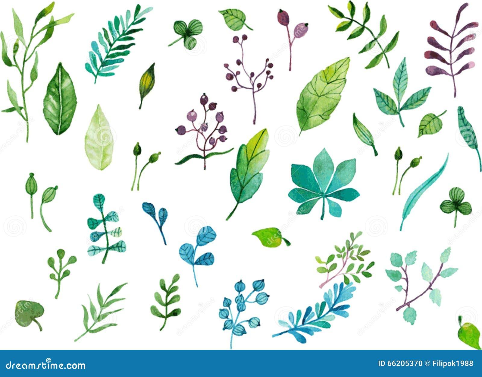 手画水彩叶子 与叶子的五颜六色的花卉收藏 婚礼,生日 庆祝卡片元素.图片