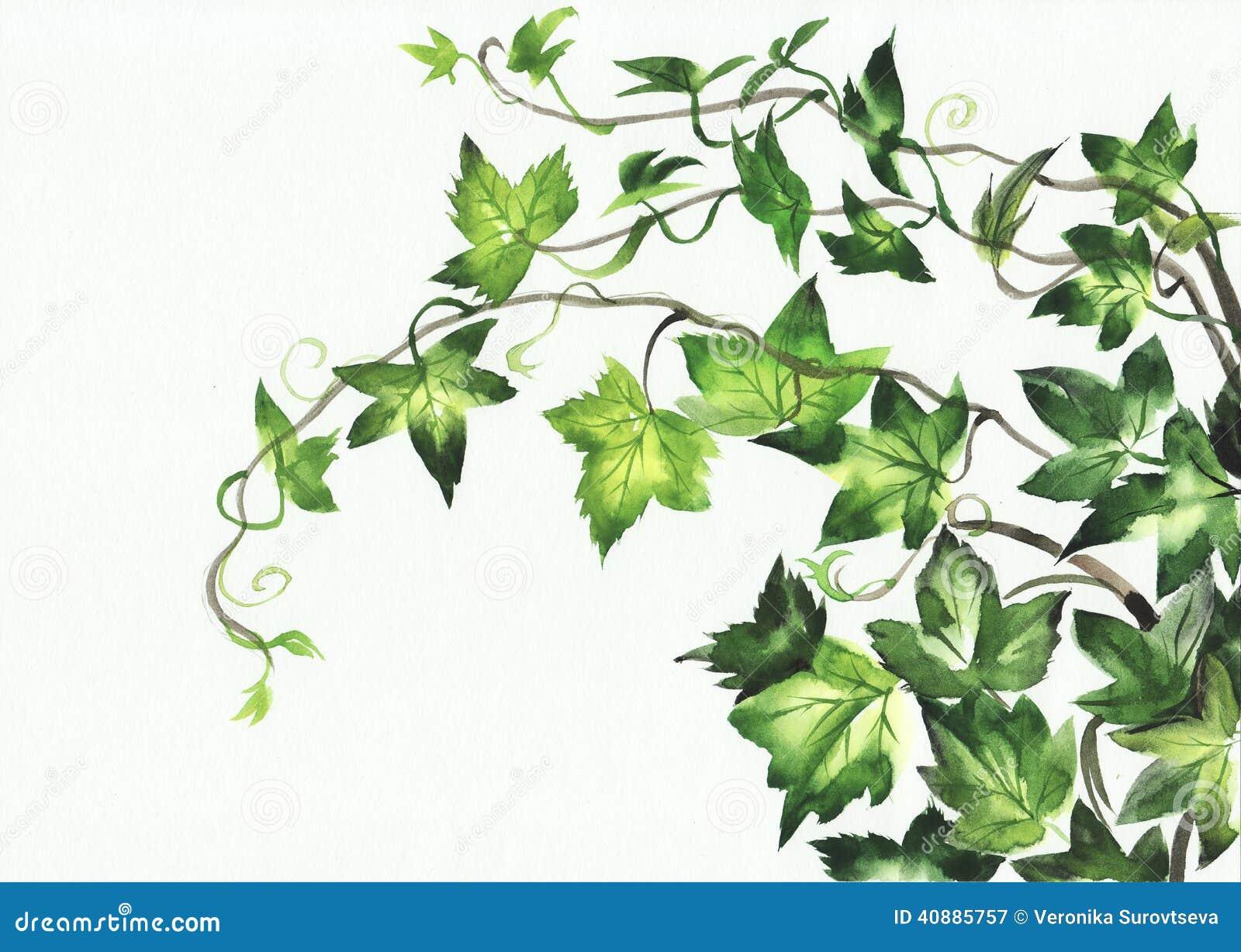 叶子水彩步骤图