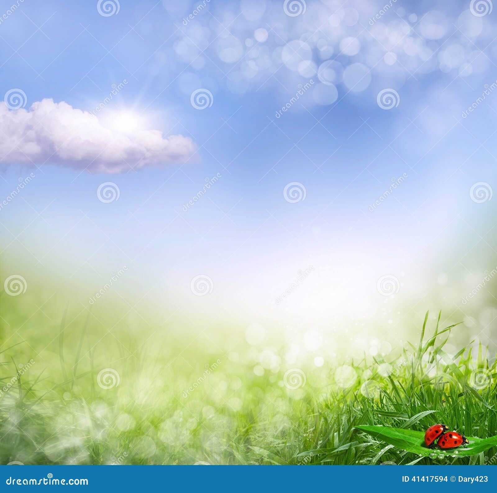 与草defocus的抽象春天背景
