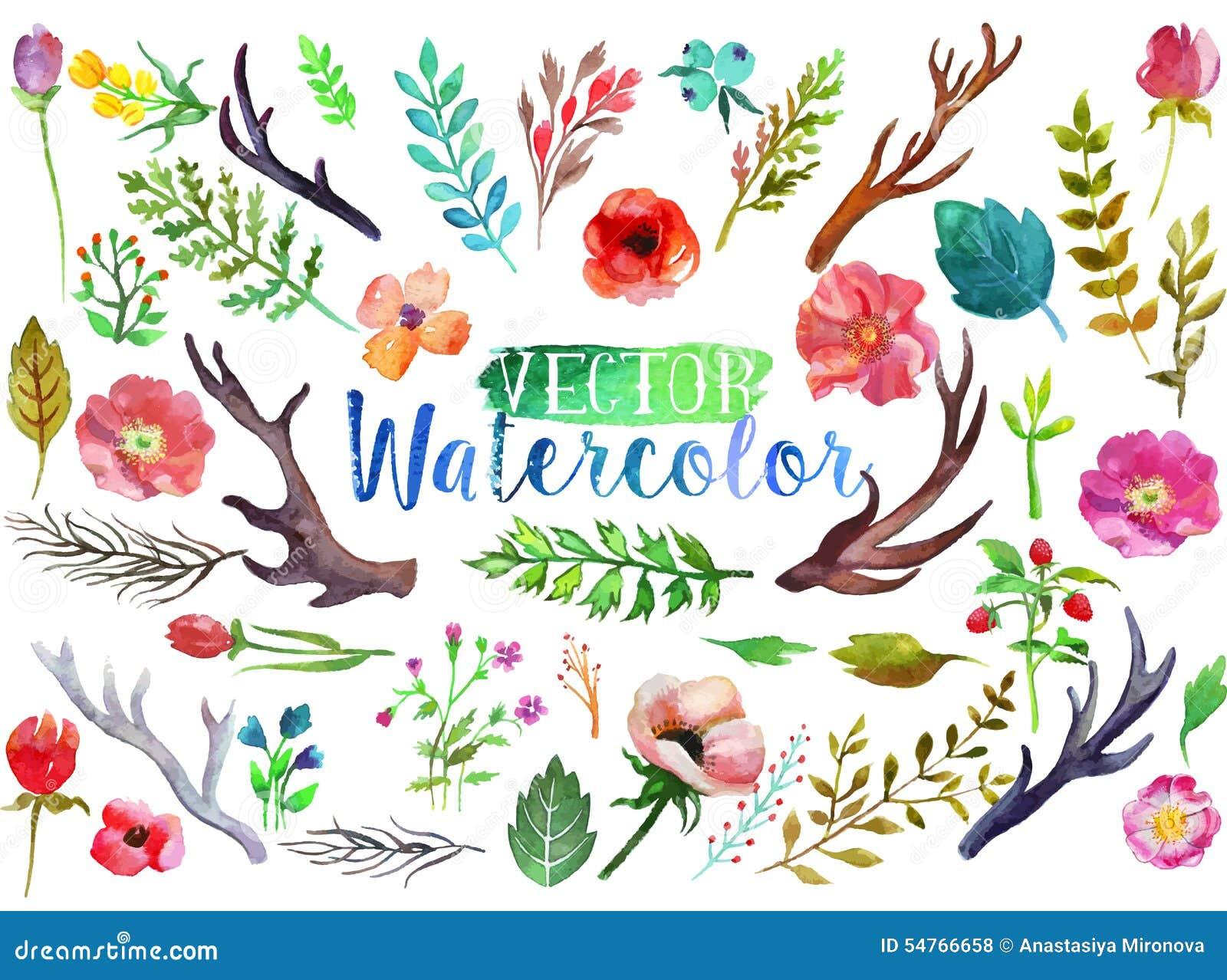 导航水彩手拉的五颜六色的花,叶子和垫铁 在白色背景的艺术油漆.图片
