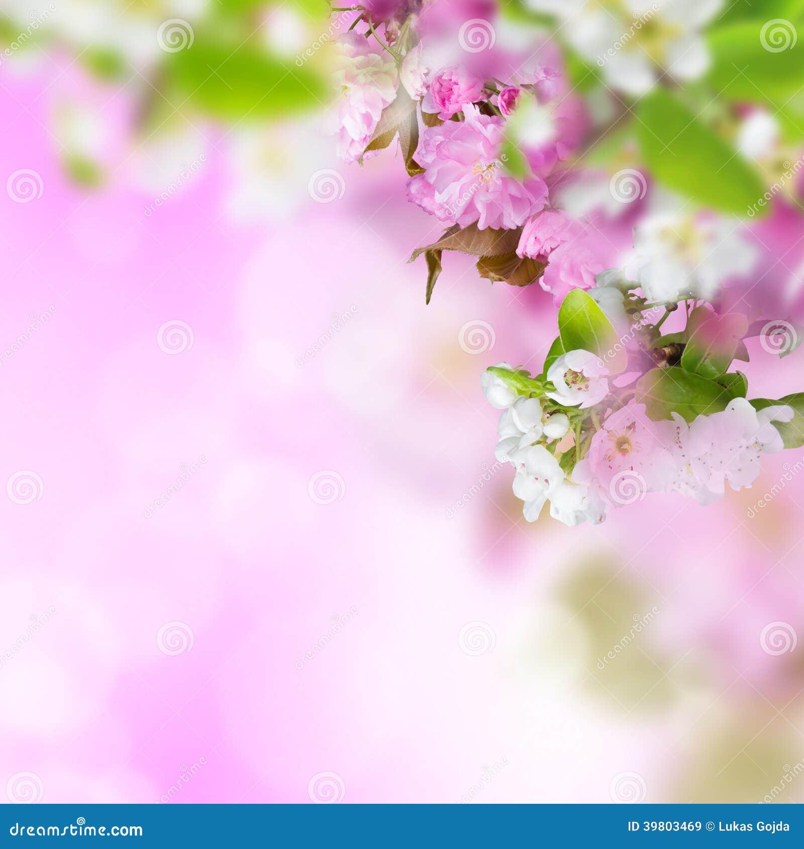 春天进展背景 库存照片