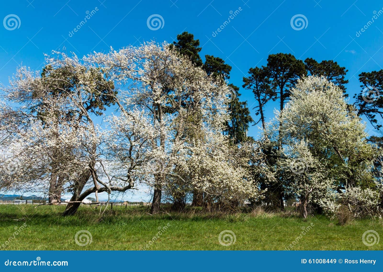 春天树 库存照片 - 图片