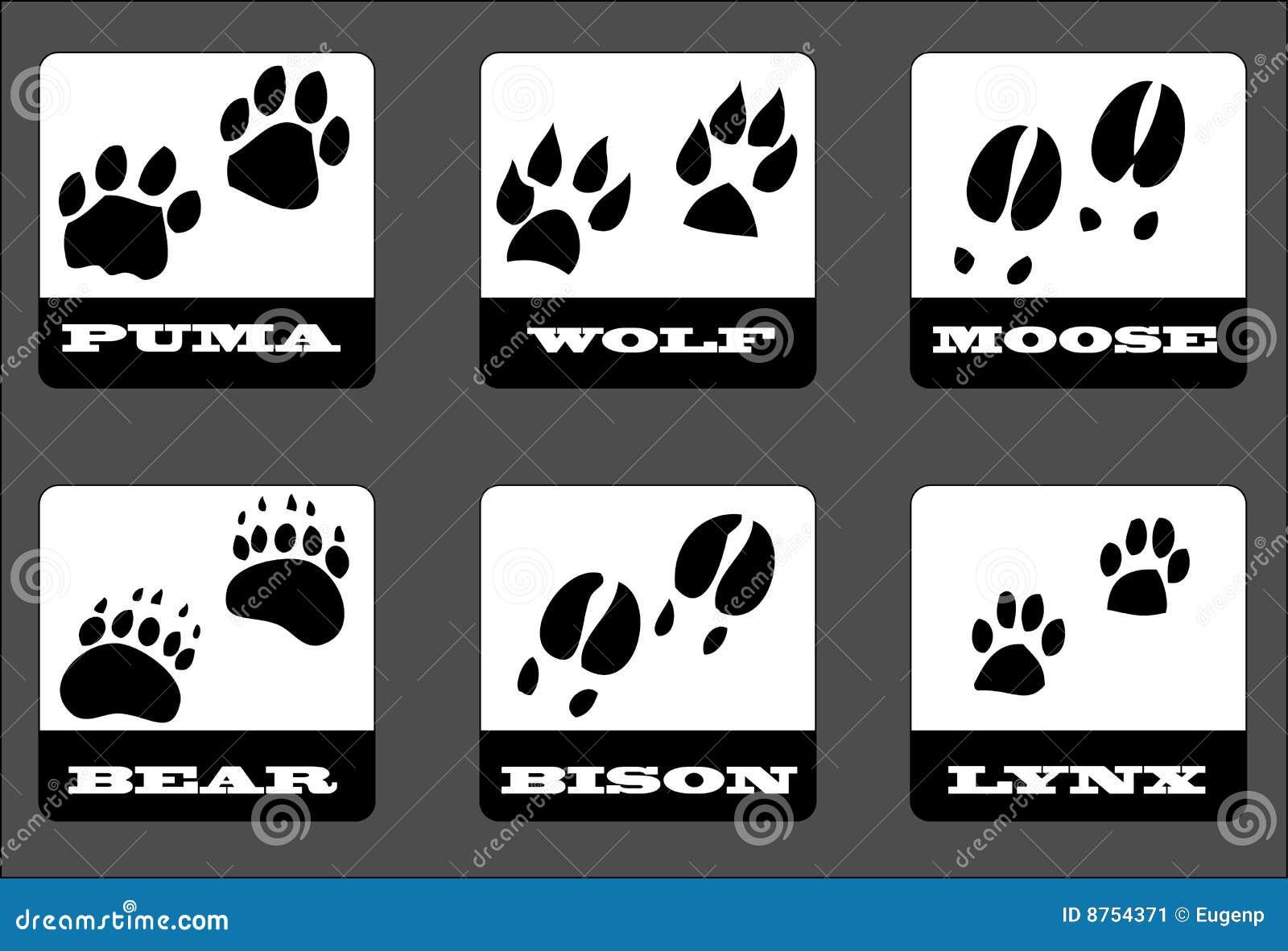 动物脚印 库存图片 - 图片