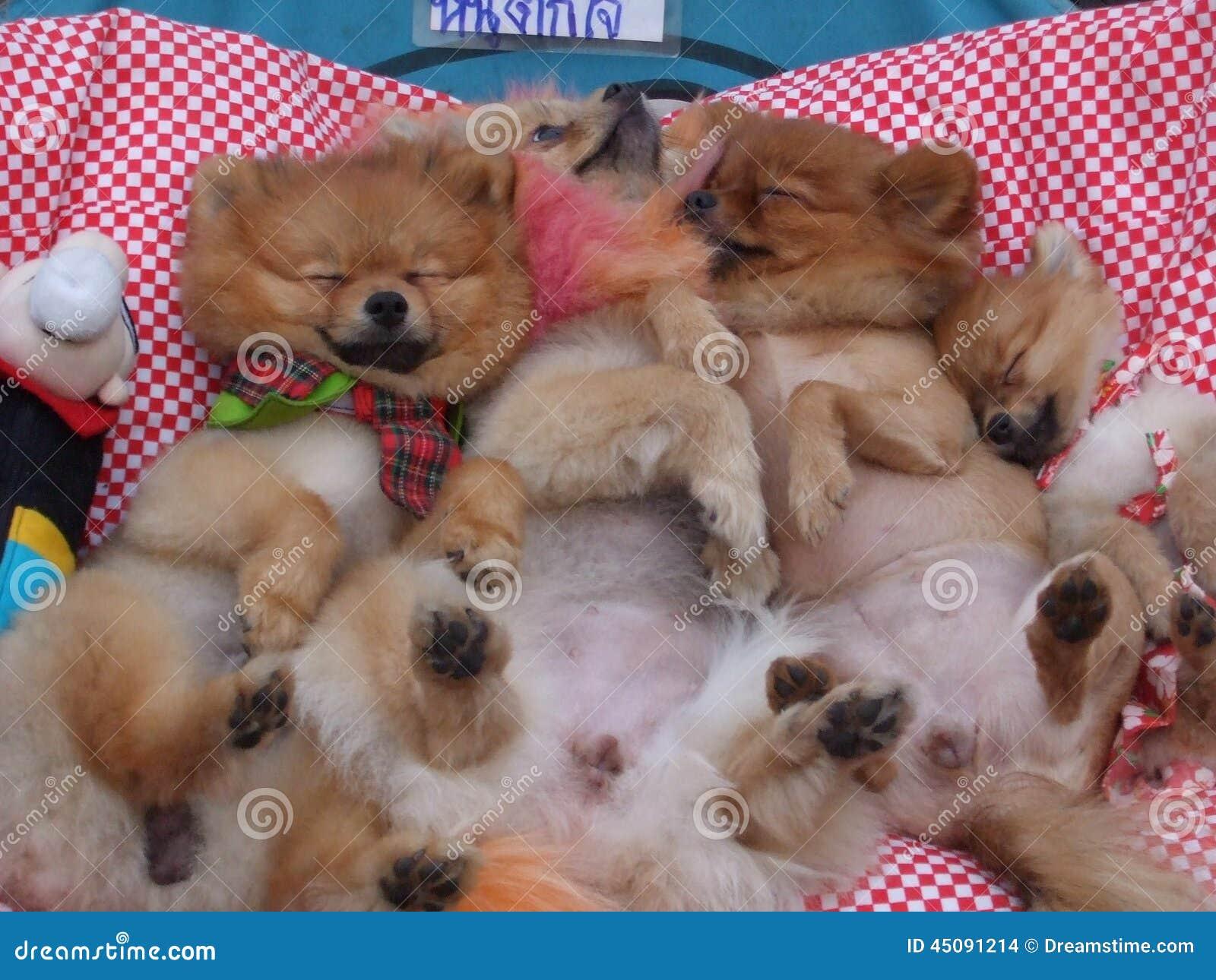 逗人喜爱睡觉的狗