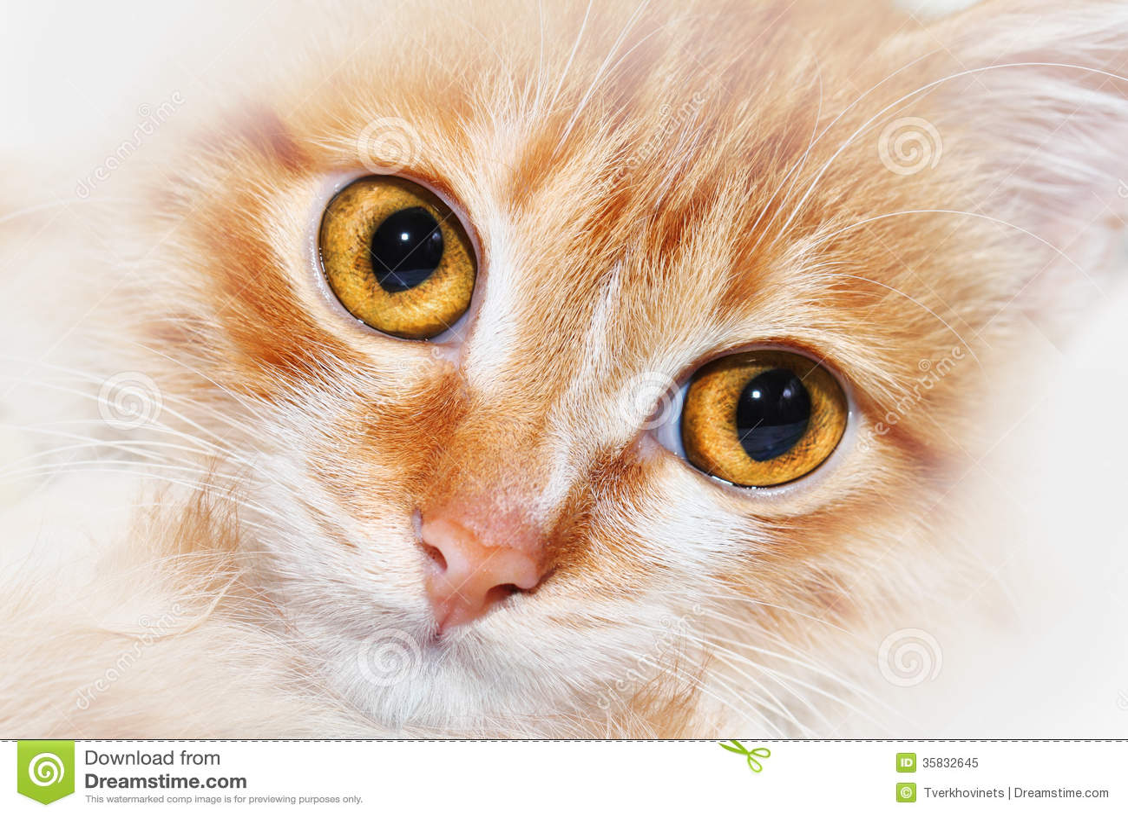 动物鼻子的图片