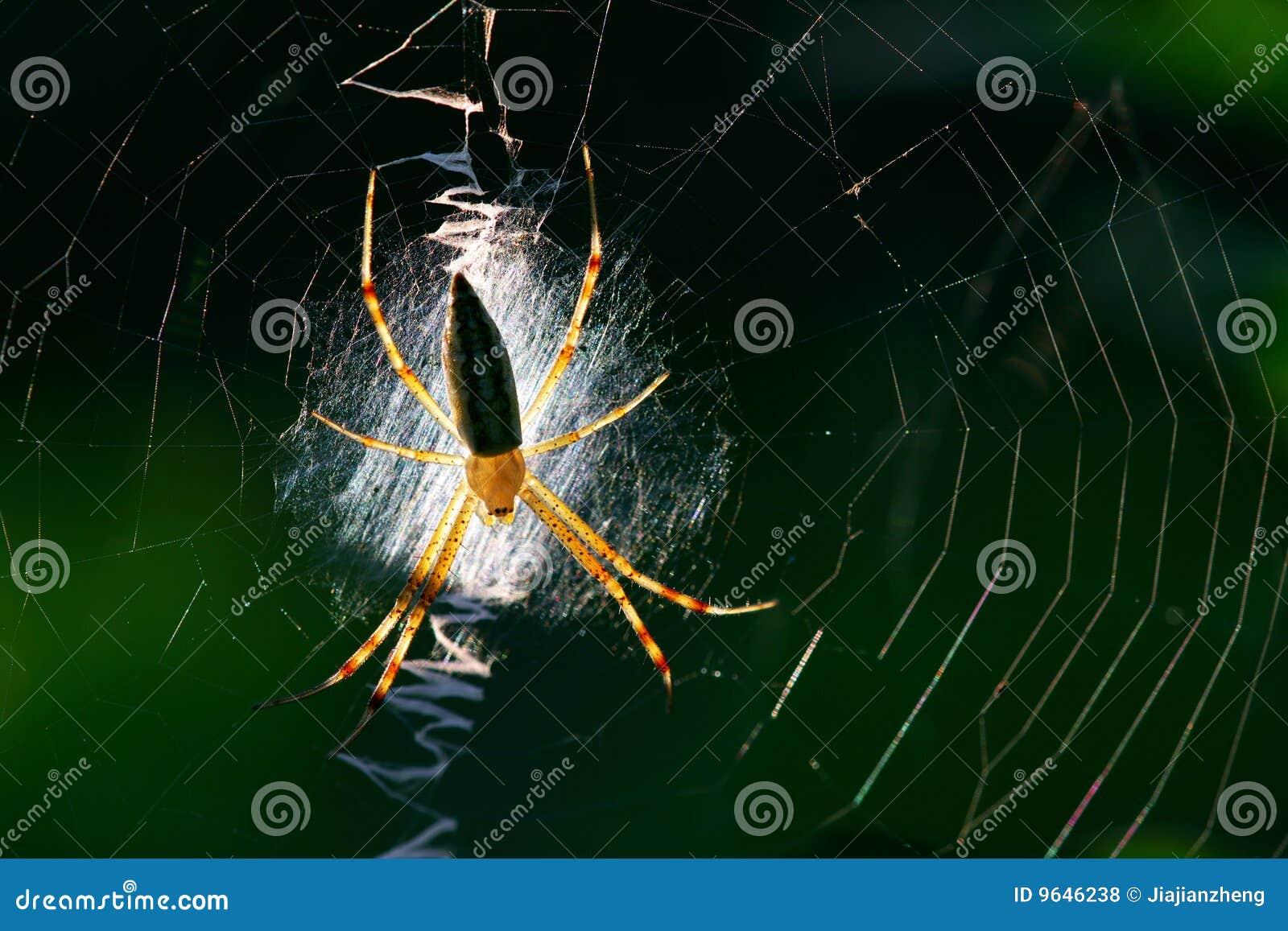 可爱的蜘蛛 免版税库存照片