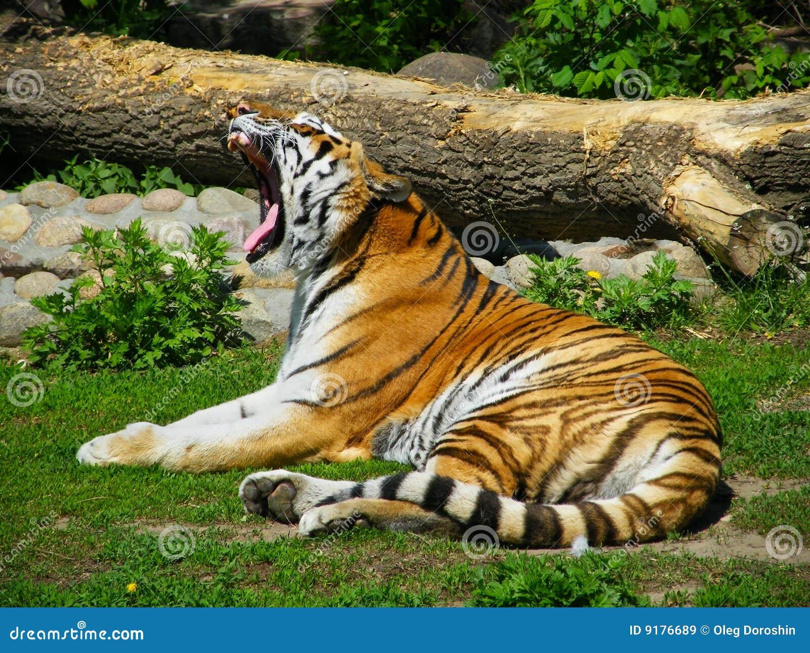 动物园一只老虎多少钱