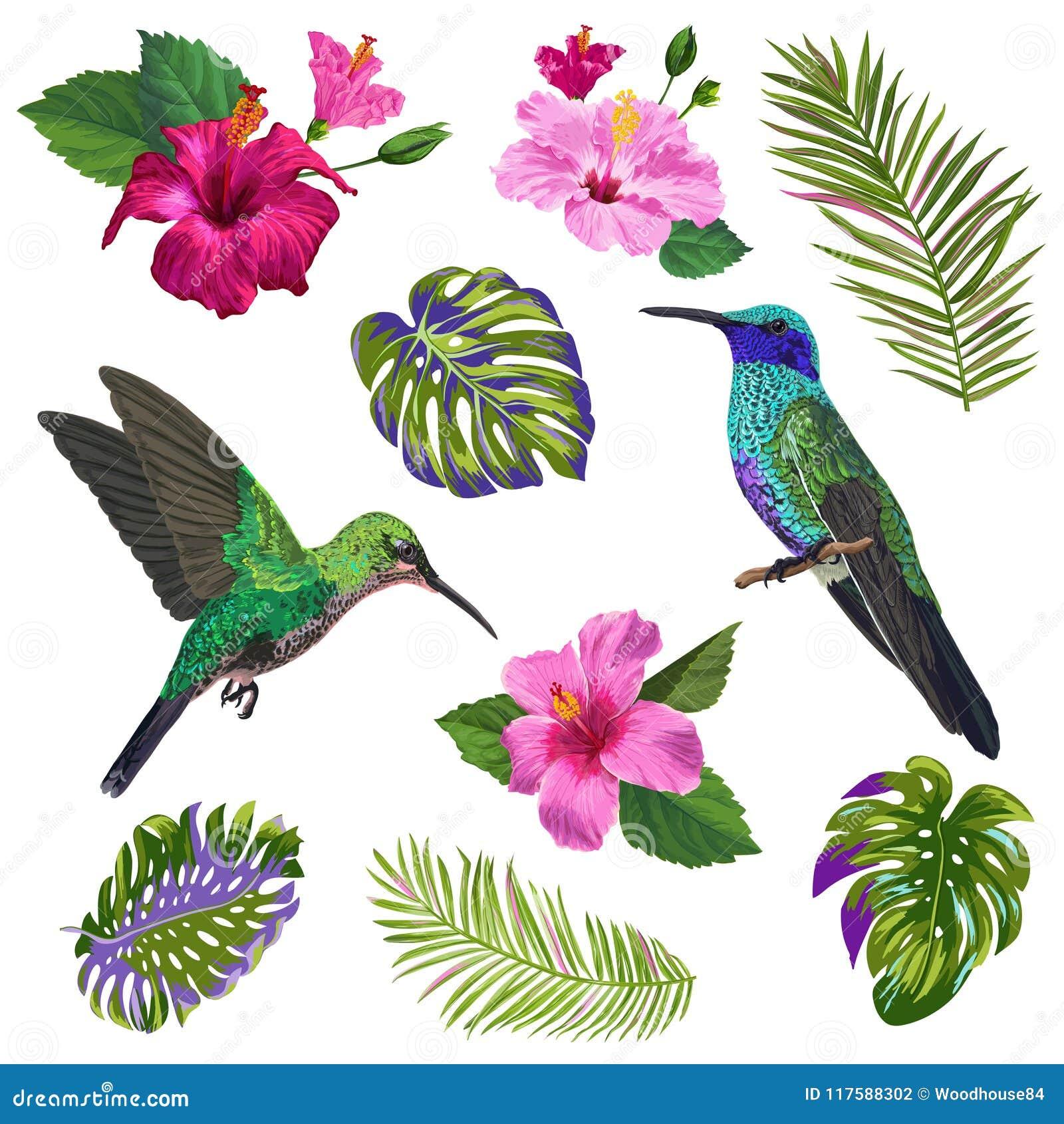  del colibrí, de HibisÑ de la acuarela nosotros flores y hojas de palma tropicales Pájaros exóticos dibujados mano de Colibri y