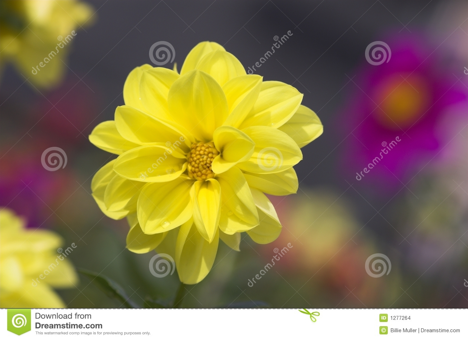 ¡Amarillo hermoso!