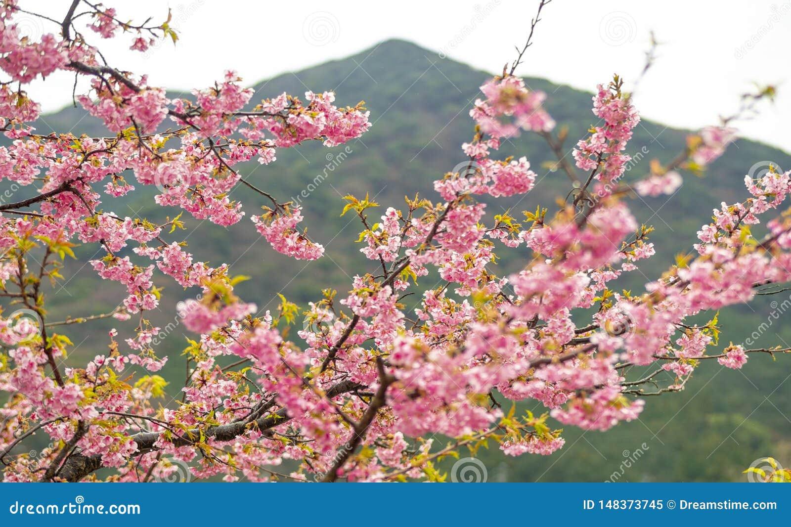 ?Flores de cerezo, aceptables!