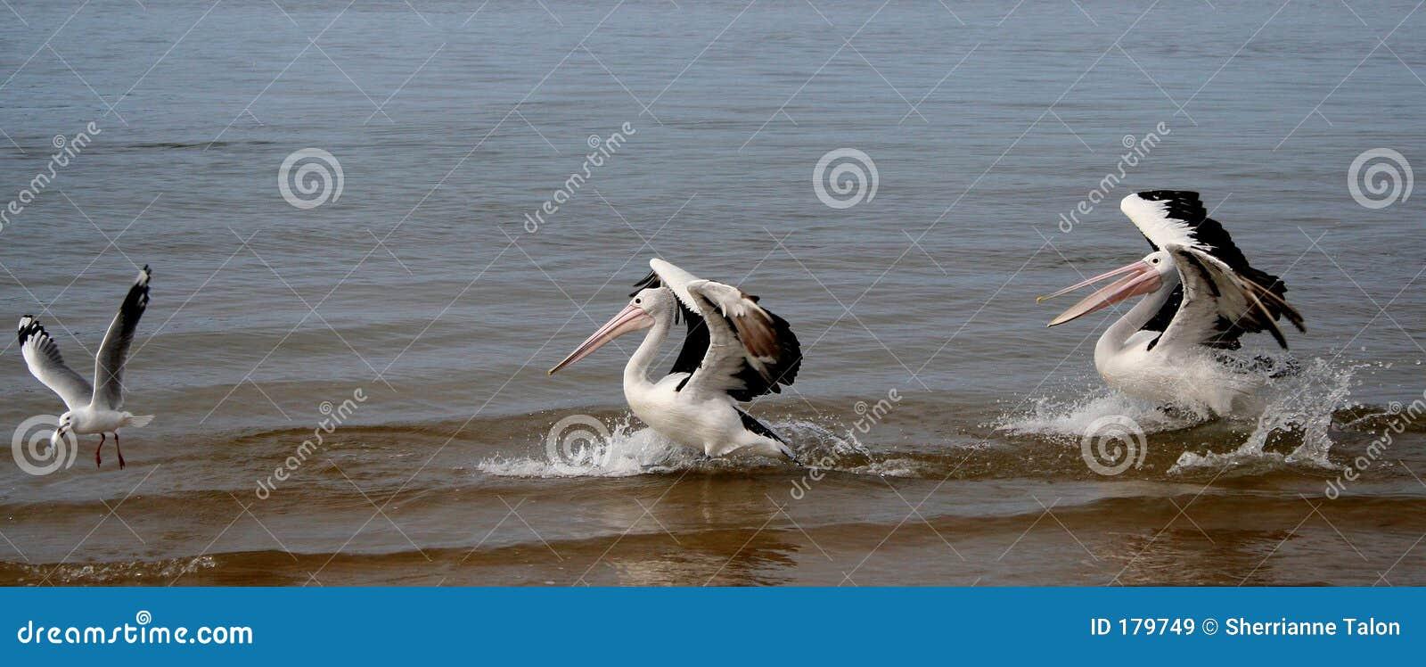 ¡Siga ese pescado!!!