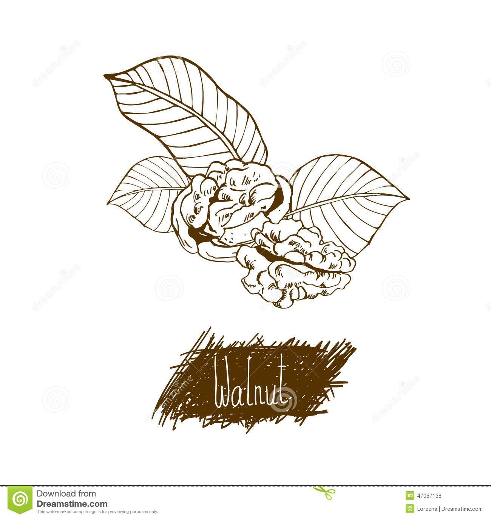 螺母 核桃 葱