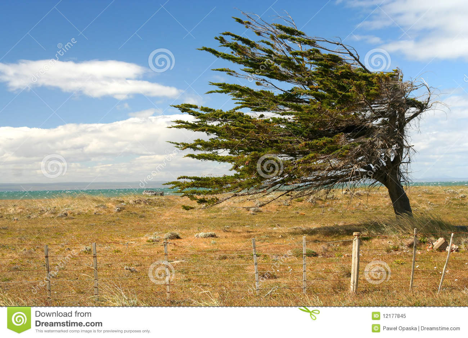 videos de viento en contra: