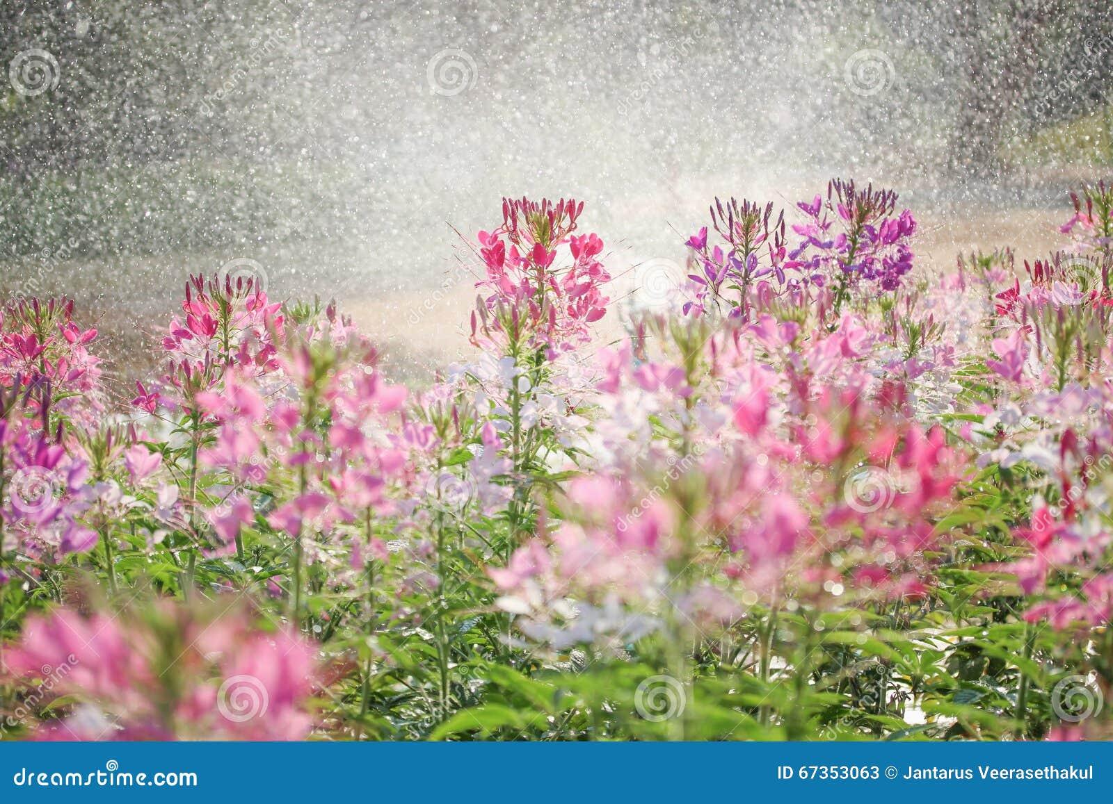 ฺBeautiful bloemen