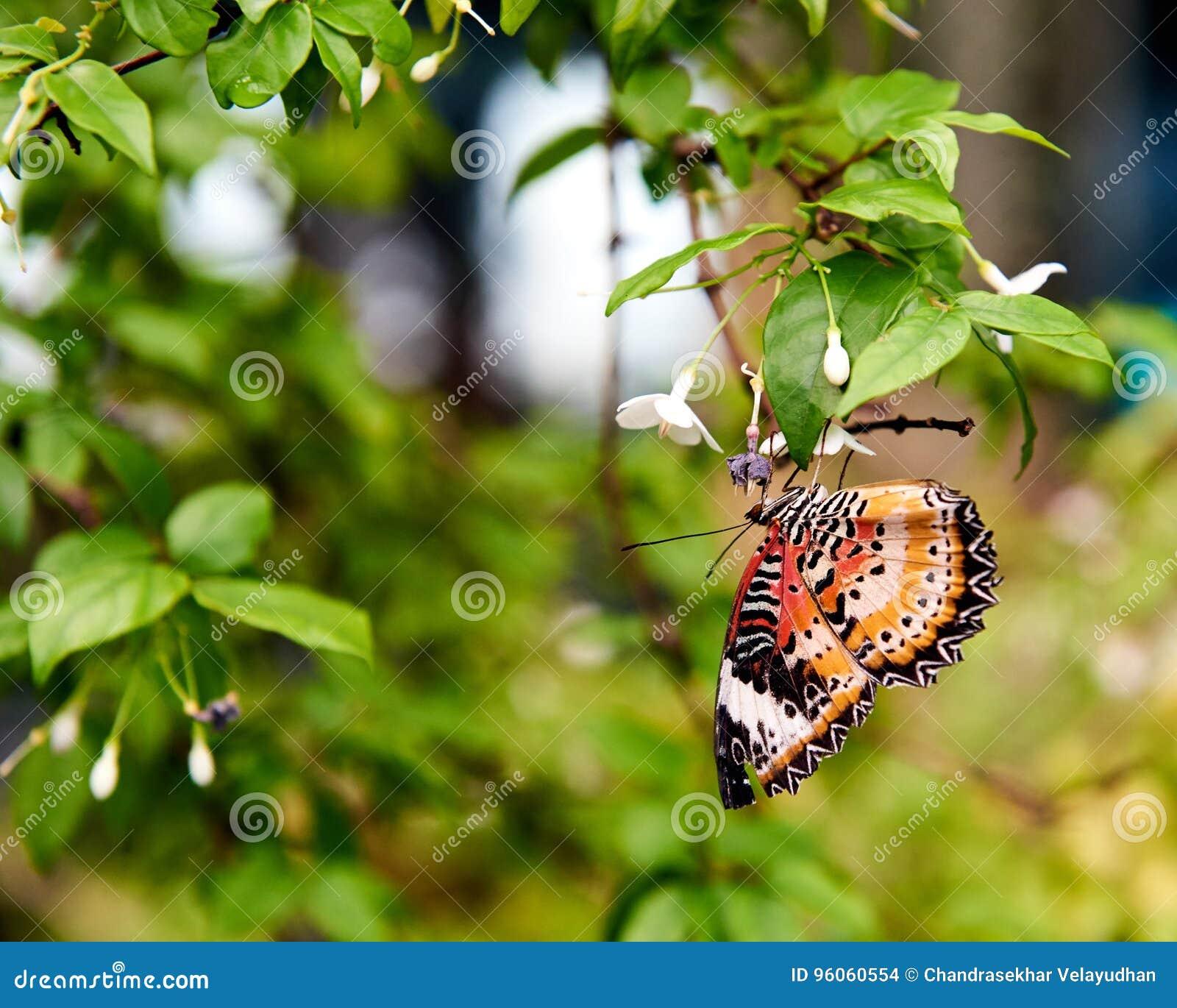 À l envers été perché beau par papillon sur une feuille