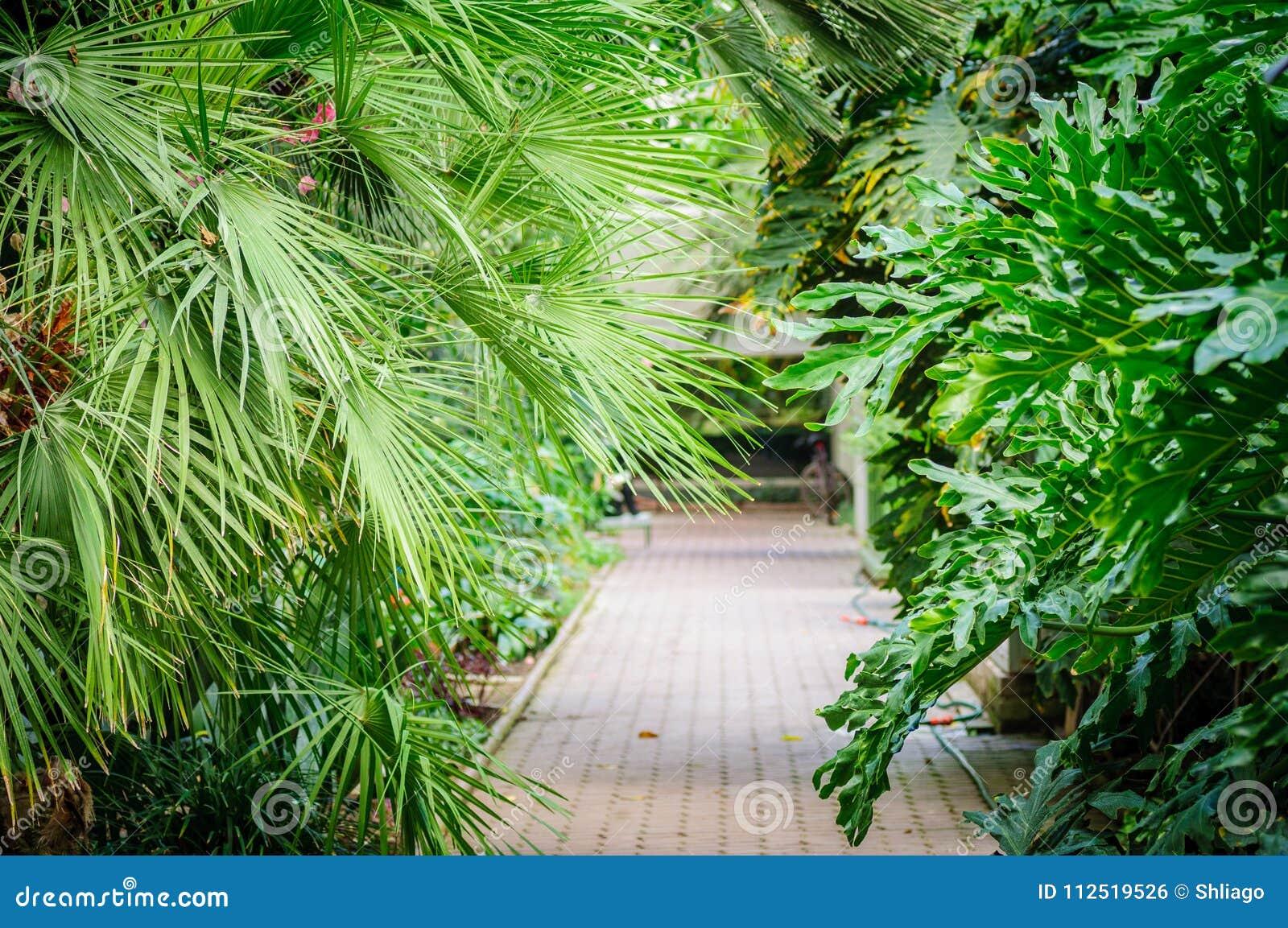 À L\'intérieur D\'une Maison De Paume - Serre - Jardin D\'hiver Photo ...