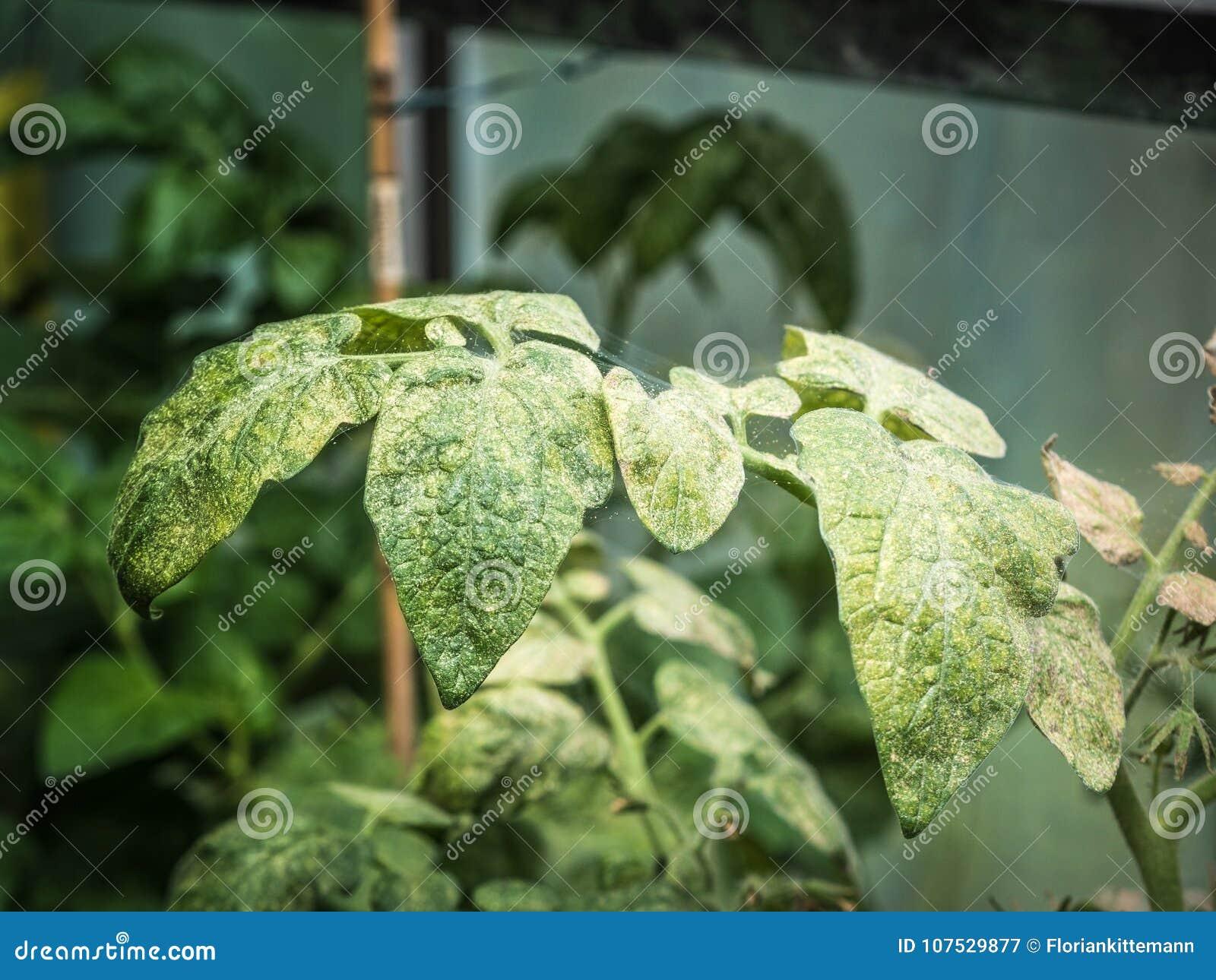ácaros en plantas